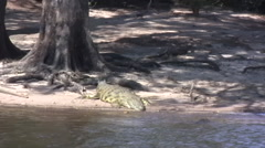Nile Crocodile in the Chobe National Park, BOTSWANA Stock Footage