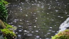Pond in the rain at Japanese Garden inToufuku-ji in Kyoto, Japan -Long Shot- Stock Footage