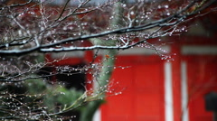 Raindrop on Tree Branch & Red Pagoda in Kyoto, Japan -Long Shot- Stock Footage