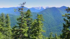 Scenic Hurricane Ridge, Olympic National Park, Port Angeles, Washington Stock Footage