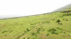 Animal Aerial Cow Grass Landscape Meadow Green Sunny Blue Mountain Scenic Stock Footage
