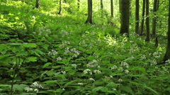 Summer forest with wild flowers Stock Footage