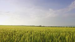 Field Sunset Green Grass Beautiful Agriculture Sky Nature Farm Summer Season Stock Footage