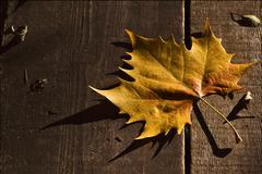 A leaf in autumn in the wood Stock Photos