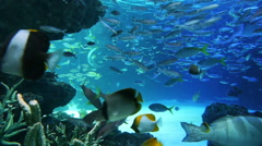 Underwater Seascape at Pacific Aquarium in Sunshine 60, Ikebukuro, Japan - stock footage