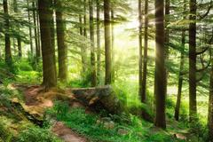 Stock Photo of Sunrays falling into a vibrant green forest