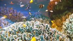 Underwater Seascape at Pacific Aquarium in Sunshine 60, Ikebukuro, Japan Stock Footage