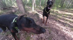 Funny dogs face Stock Footage
