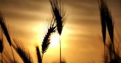 green grass sunset 4k - stock footage