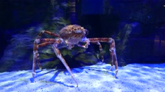 Red king crab stands on white sand under refracted light, opens mouth and feed Stock Footage