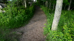 Trail in the forest, in Shenandoah National Park, Virginia. Stock Footage