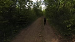 Two doberman dogs playing in forest Stock Footage