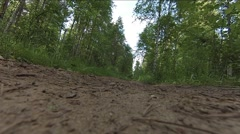 Dogs running fast on the forest road Stock Footage