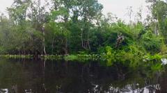 Kayaking down the Wekiva Springs River in Florida Stock Footage