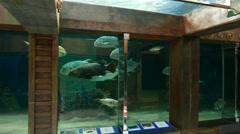 Huge oceanarium tank, tune fish shoal tracking camera, long shot Stock Footage