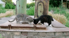 Two stray cats feeding near pipes Stock Footage