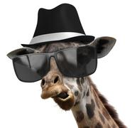 Funny animal portrait of a giraffe detective with shades and a fedora Stock Photos