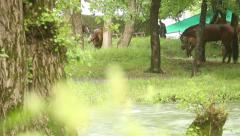 horses on the river 2 - stock footage