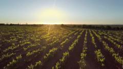 Aerial vineyard meadow Stock Footage