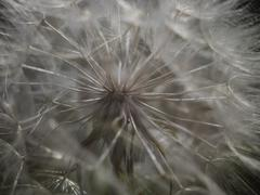 Stock Photo of Seed head close up