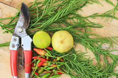 Scissors, Acacia pennata and Lemon on wood - stock photo