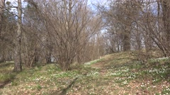 Viking graves from sweden forest near stockholm Stock Footage
