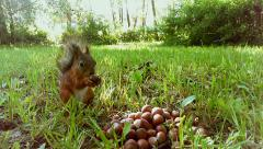 A cute little squirrel eating nuts from a big pile of nuts Stock Footage