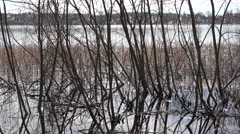 Tree branches and reeds at the lake in sweden nature Stock Footage