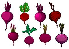Sweet garden beets vegetables with stalks and leaves - stock illustration