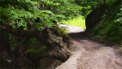 Forest, Path, Old Tree, Green, Country Road, Mysticism - stock footage