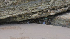 Pair of blue crabs under the stone, zooming in video. Stock Footage