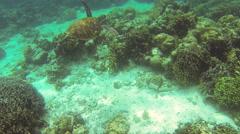 Sea turtle in Philippine Sea Stock Footage