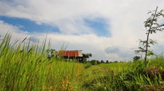 Nature green rice farm in Thailand - stock footage