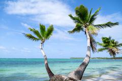 Natural beach with palm trees in the Dominican Republic Stock Photos