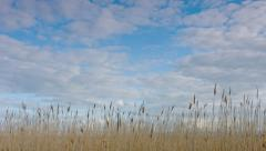 Tall grass and sky - timelapse Stock Footage