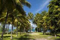 Beach on the tropical island. Clear blue water, sand and palm trees in Tahiti. - stock photo