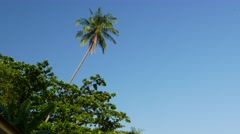 Pure scene, palm tree above trees leafage against blue sky, evening sunlight Stock Footage
