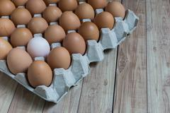 Leadership Concept : White egg is outstanding from the group of brown eggs. Stock Photos
