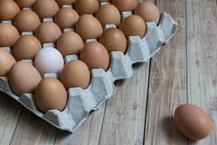 Leadership Concept : White egg is outstanding from the group of brown eggs. - stock photo