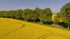 Aerial view of an alley and blooming canola fields Stock Footage