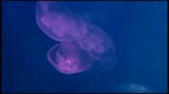 medusa underwater video - stock footage