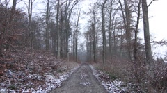 Pathway in a snowy forest - stock footage
