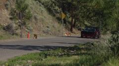 motorsports, hillclimb race, into hairpin, red Datsun 510 - stock footage