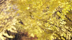 Autumn leaves fluttering in the wind Stock Footage