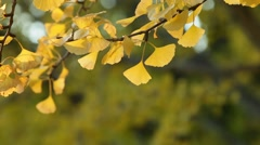 Green leaves fluttering in the wind Stock Footage