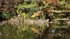 Heron and ducks in a lake at city park , Tokyo, Japan Stock Footage