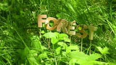 Green Bug crawling on Forest word - stock footage