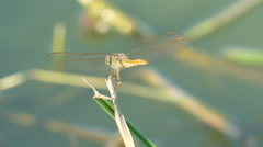 The beautiful dragonfly insect resting on green grass Stock Footage
