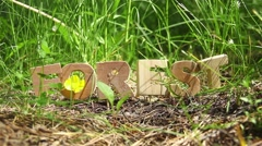 Forest Word on the Anthill - stock footage
