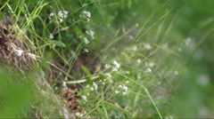 Flowers on the hillside - close-up - refocusing Stock Footage